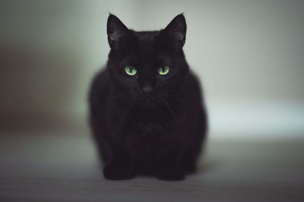 黑貓代表厄運